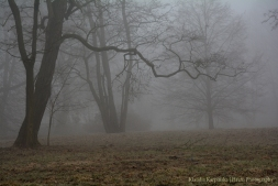 Trees Bathed in a Spring Mist