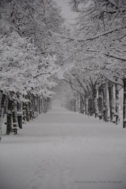 Strandvägen i snö