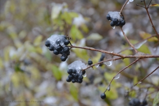 Frozen / Melted II