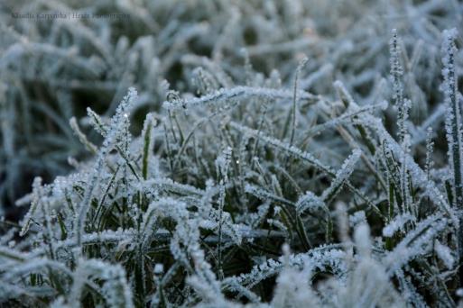 Frozen Greenery