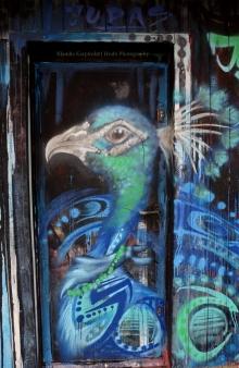 Peafowl Graffiti II