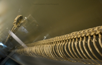 Snake skeleton II
