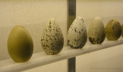 Egg Collection IV
