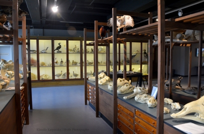 In the Zoological Museum II