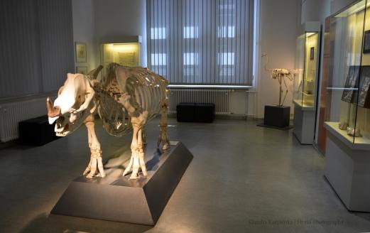 In the Zoological Museum Kiel
