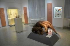 In the Zoological Museum Kiel II