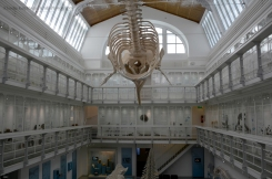 Whales and birds in the central hall of museum which was designed by architect Martin Gropius.