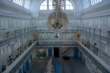 In the Zoological Museum Kiel V