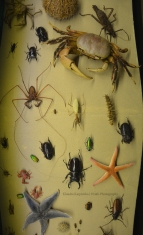 Biodiversity of Invertebrate