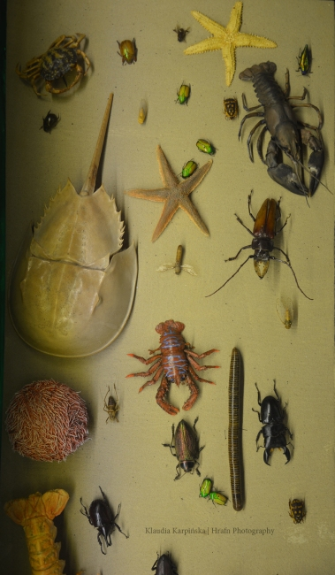 Biodiversity of Invertebrate (IV)