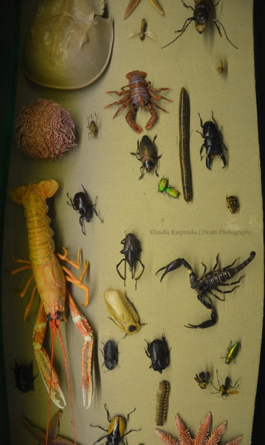 Biodiversity of Invertebrate (V)