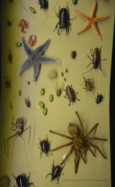 Biodiversity of Invertebrate (VI)