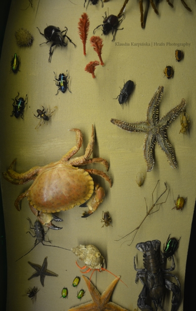 Biodiversity of Invertebrate (VII)