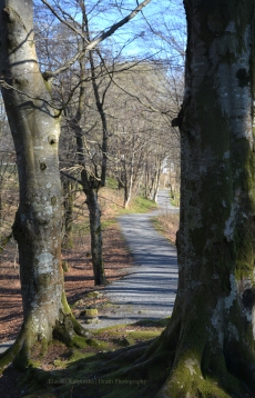 Road to Fantoft stave church