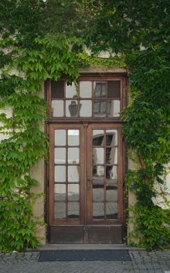 Door surrounded by European ivy (Hedera helix)