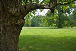 Old tree (II)