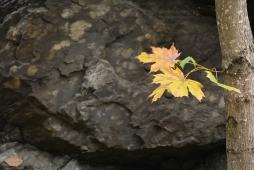 Høsten på Bygdøy (II)